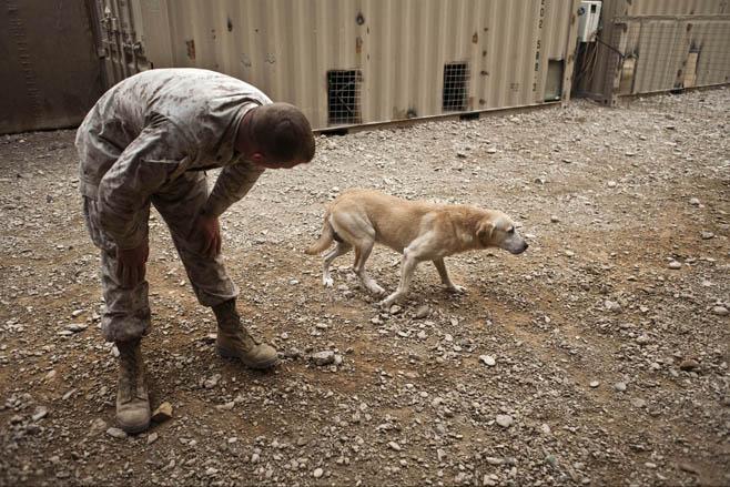 gunner the dog