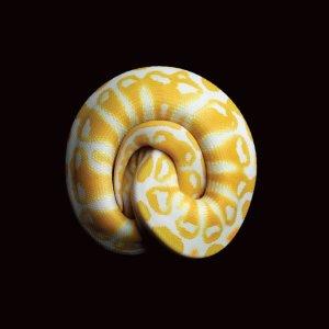 snake-grid-1-master675