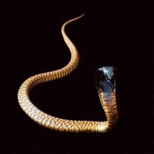 snake-grid-8-master675