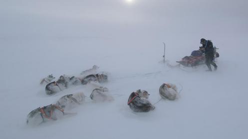 """Surprised by a blizzard."" (Credit: Morten Hilmer)"