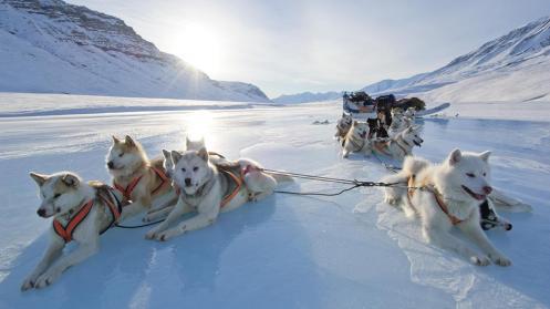 The Sirius Sled Patrol (Slædepatruljen Sirius) in Greenland (Credit: Morten Hilmer)